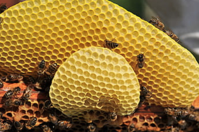 bee hive removal in miami